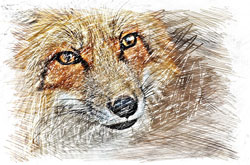 Image of a wolf draw