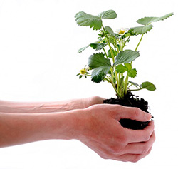 Picture of someone holding a plant