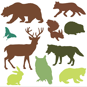 Image of various predator and prey animals