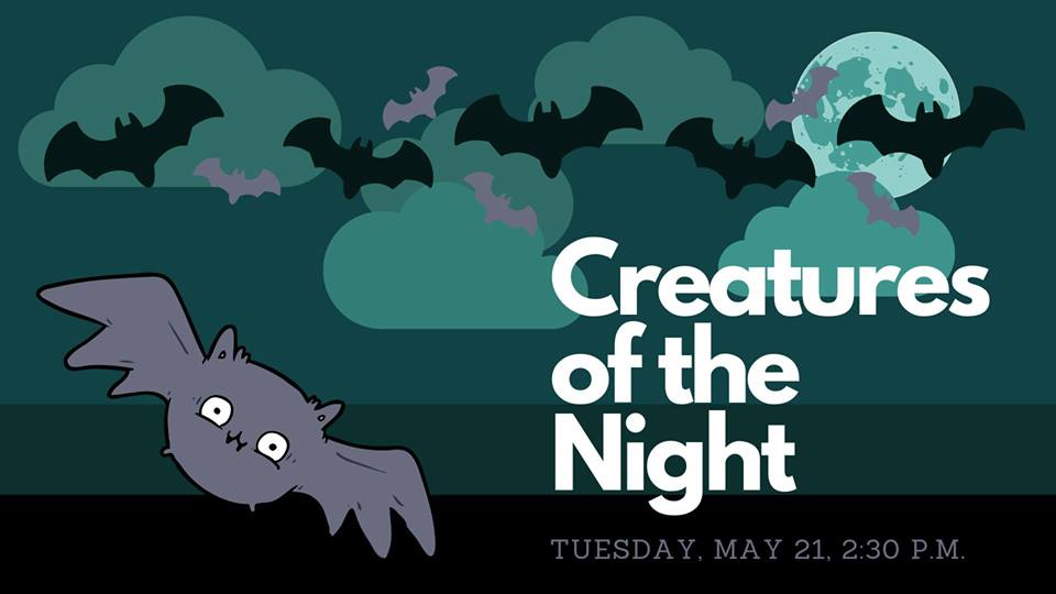creatures at night graphic