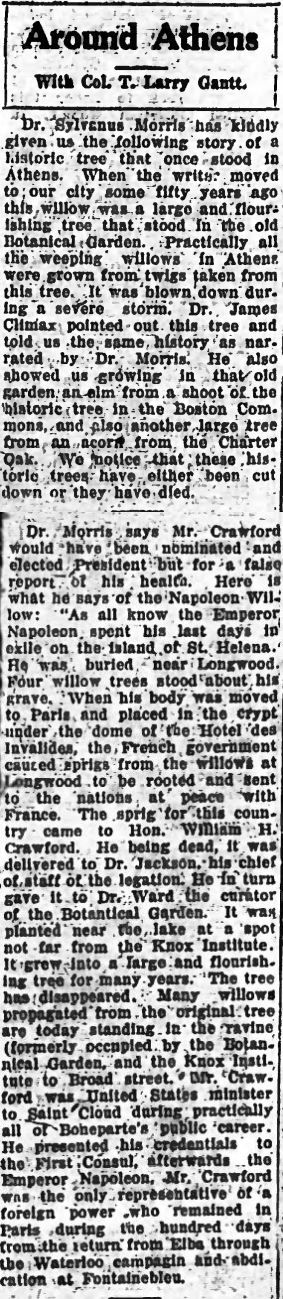 A clipping from the January 20th, 1927 Banner-Herald describing the history of the Napoleon Willow in Athens, Ga.